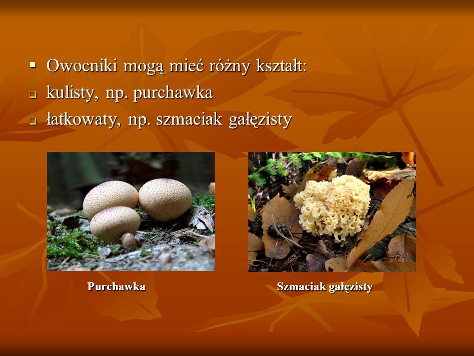Owocniki mogą mieć różny kształt: Owocniki mogą mieć różny kształt: kulisty, np. purchawka kulisty, np. purchawka łatkowaty, np. szmaciak gałęzisty ła
