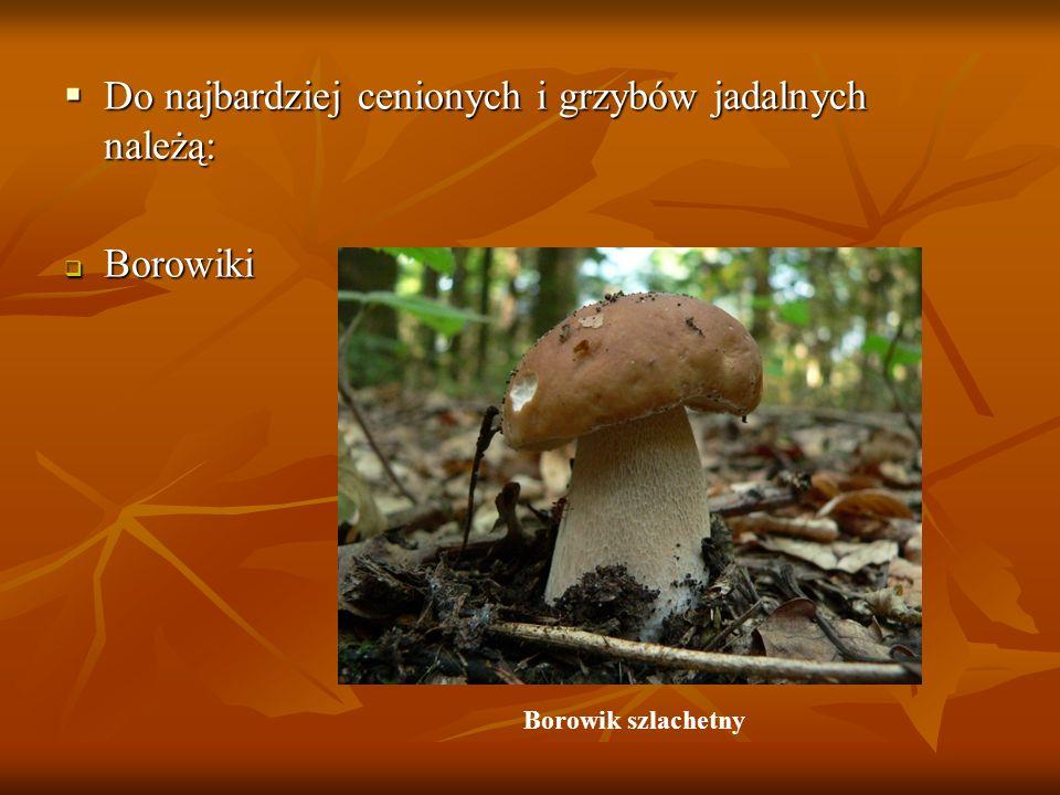 Do najbardziej cenionych i grzybów jadalnych należą: Do najbardziej cenionych i grzybów jadalnych należą: Borowiki Borowiki Borowik szlachetny