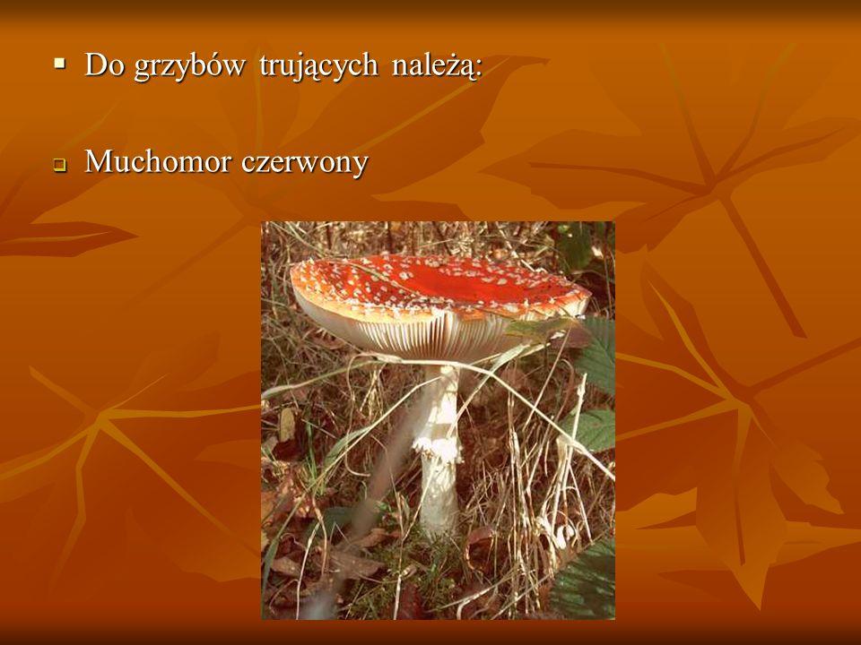 Do grzybów trujących należą: Do grzybów trujących należą: Muchomor czerwony Muchomor czerwony