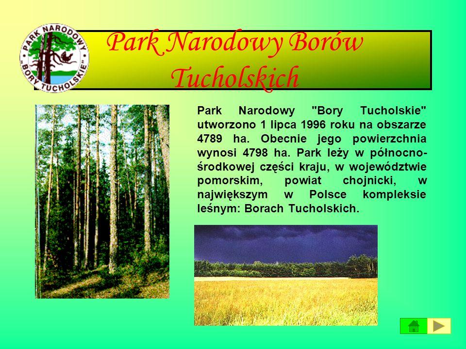 Bieszczadzki Park Narodowy Bieszczadzki Park Narodowy zajmuje powierzchnię 29202 ha w najwyżej położonej części Bieszczadów. Szczególne walory przyrod