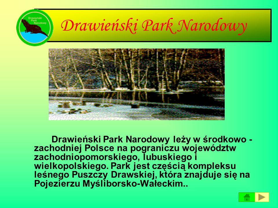 Park Narodowy Borów Tucholskich Park Narodowy