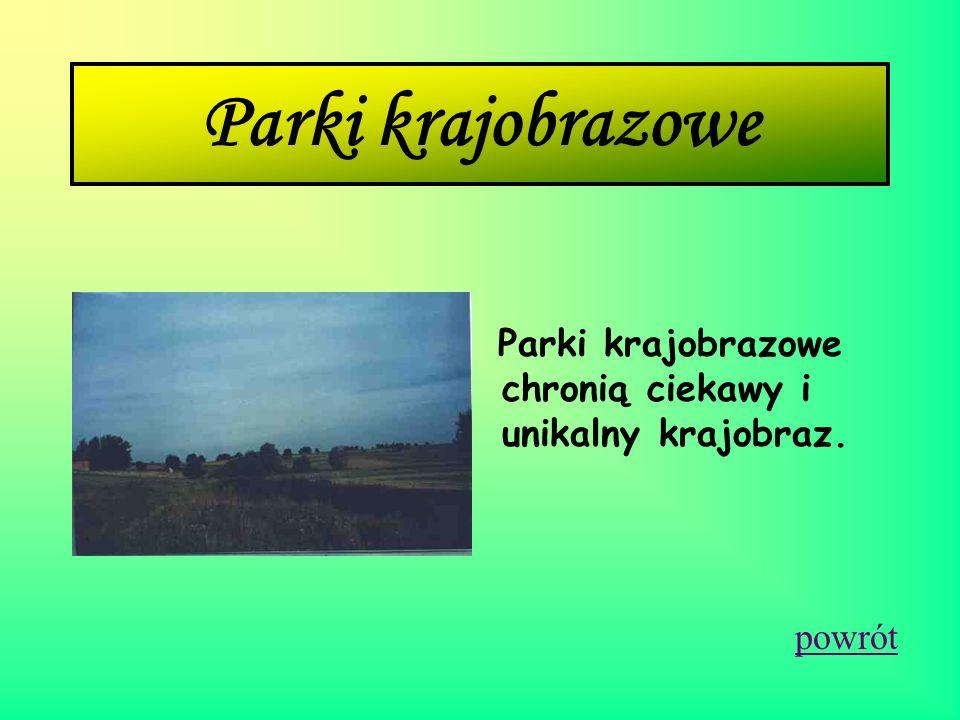 Ojcowski Park Narodowy Ojcowski Park Narodowy jest położony w południowej części kraju, w województwie małopolskim, w odległości 16 km na północ od Kr