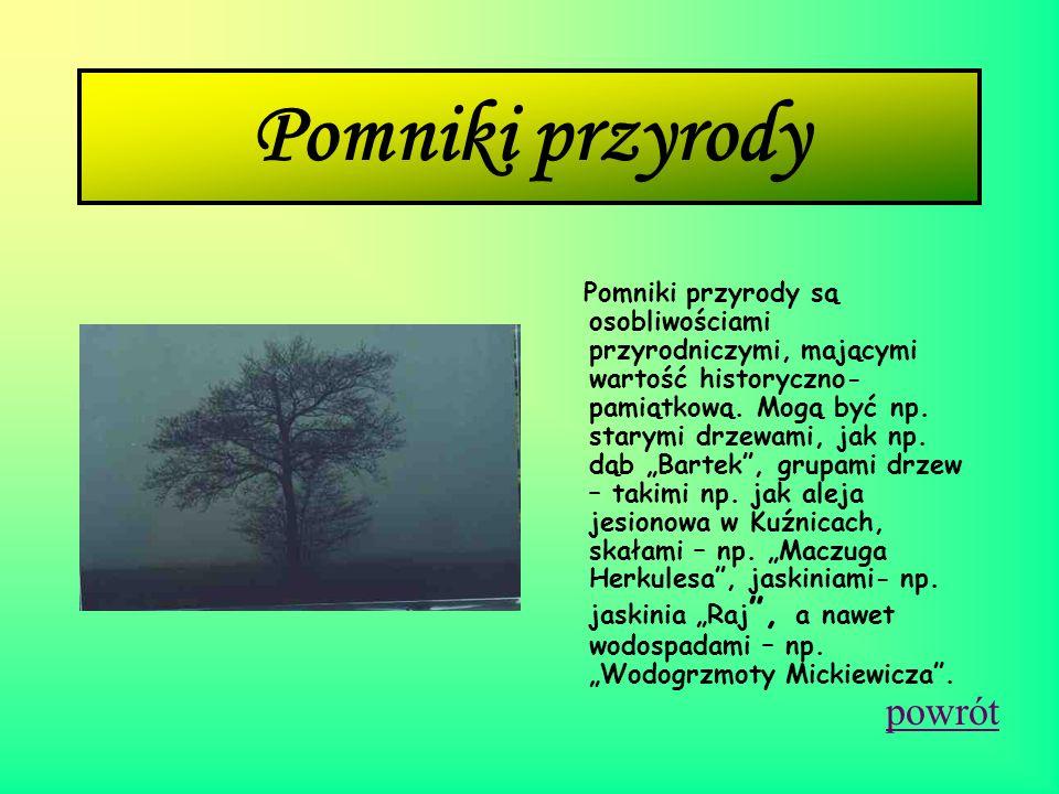Perły polskiej przyrody pomniki przyrody ochrona gatunkowa ( roślin i zwierząt ) rezerwaty przyrody parki narodowe parki krajobrazowe