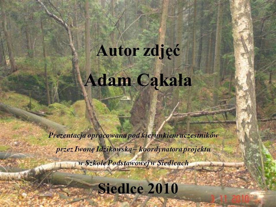 Autor zdjęć Adam Cąkała Siedlce 2010 Prezentacja opracowana pod kierunkiem uczestników przez Iwonę Idzikowską – koordynatora projektu w Szkole Podstaw