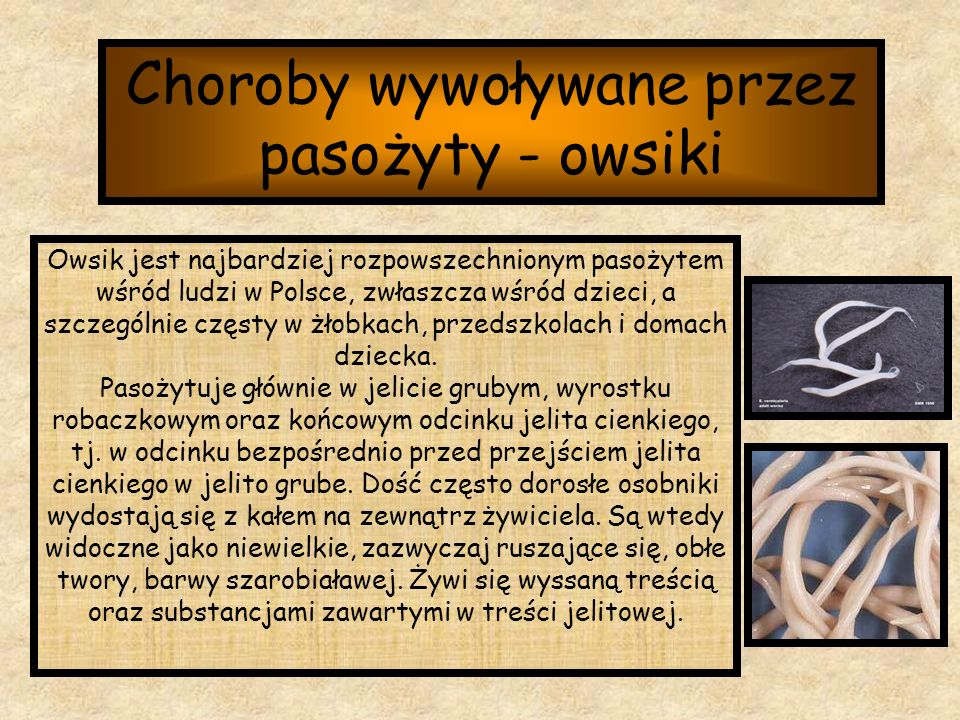 Choroby wywoływane przez pasożyty - owsiki Owsik jest najbardziej rozpowszechnionym pasożytem wśród ludzi w Polsce, zwłaszcza wśród dzieci, a szczegól