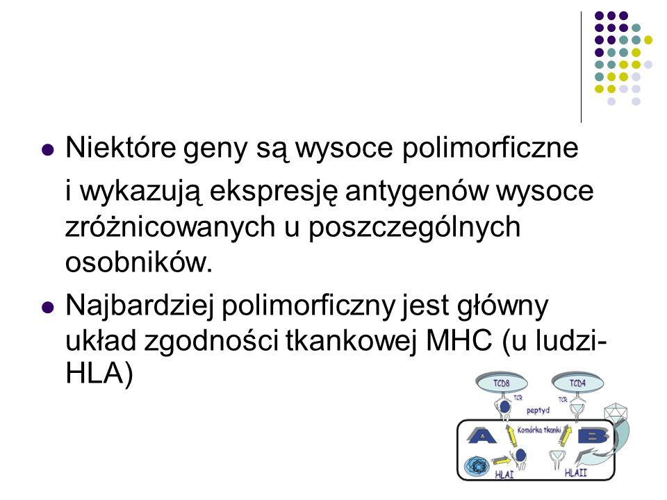 Niektóre geny są wysoce polimorficzne i wykazują ekspresję antygenów wysoce zróżnicowanych u poszczególnych osobników. Najbardziej polimorficzny jest