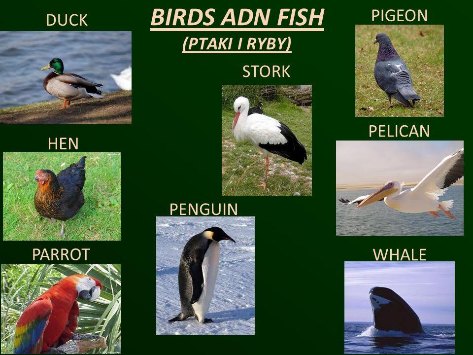 BIRDS ADN FISH (PTAKI I RYBY) DUCK STORK PIGEON HEN PENGUIN PELICAN PARROT WHALE