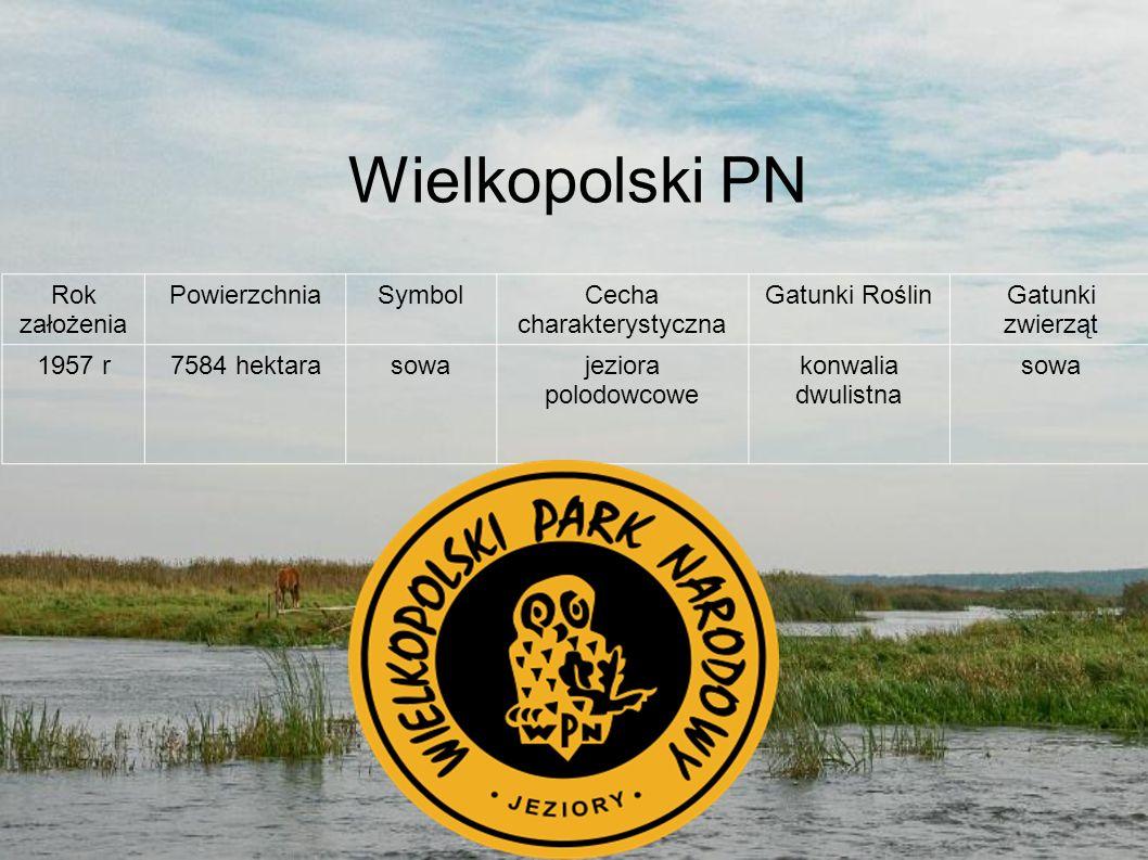 Wielkopolski PN Rok założenia PowierzchniaSymbolCecha charakterystyczna Gatunki RoślinGatunki zwierząt 1957 r7584 hektarasowajeziora polodowcowe konwa