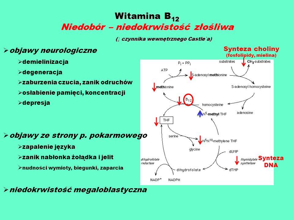 Witamina B 12 Niedobór – niedokrwistość złośliwa ( czynnika wewnętrznego Castle`a) ( czynnika wewnętrznego Castle`a) objawy neurologiczne demielinizac