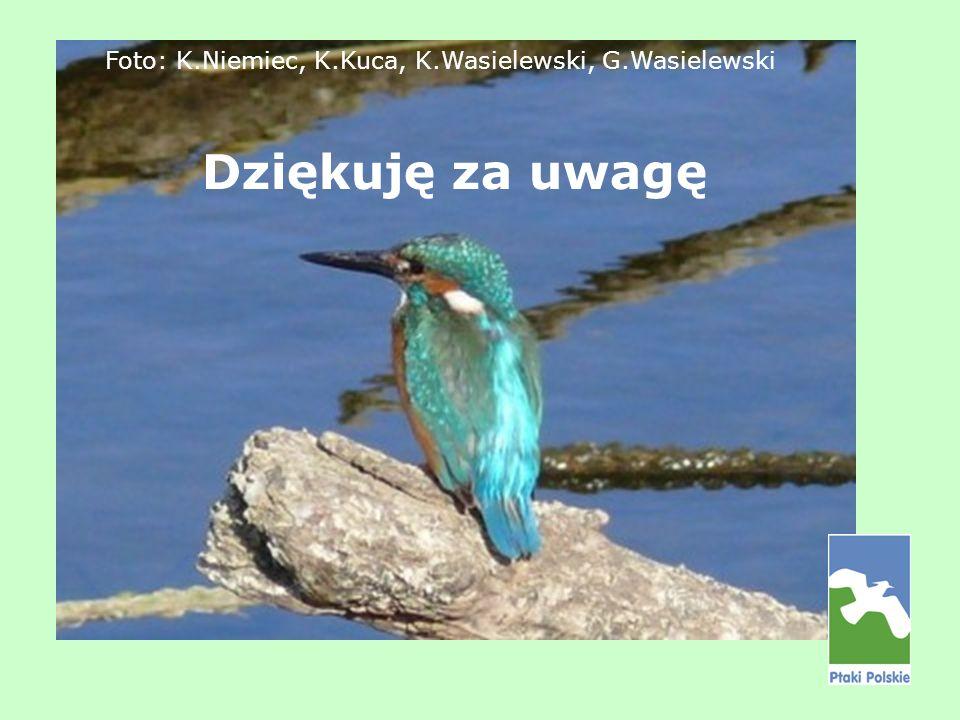 Dziękuję za uwagę Foto: K.Niemiec, K.Kuca, K.Wasielewski, G.Wasielewski