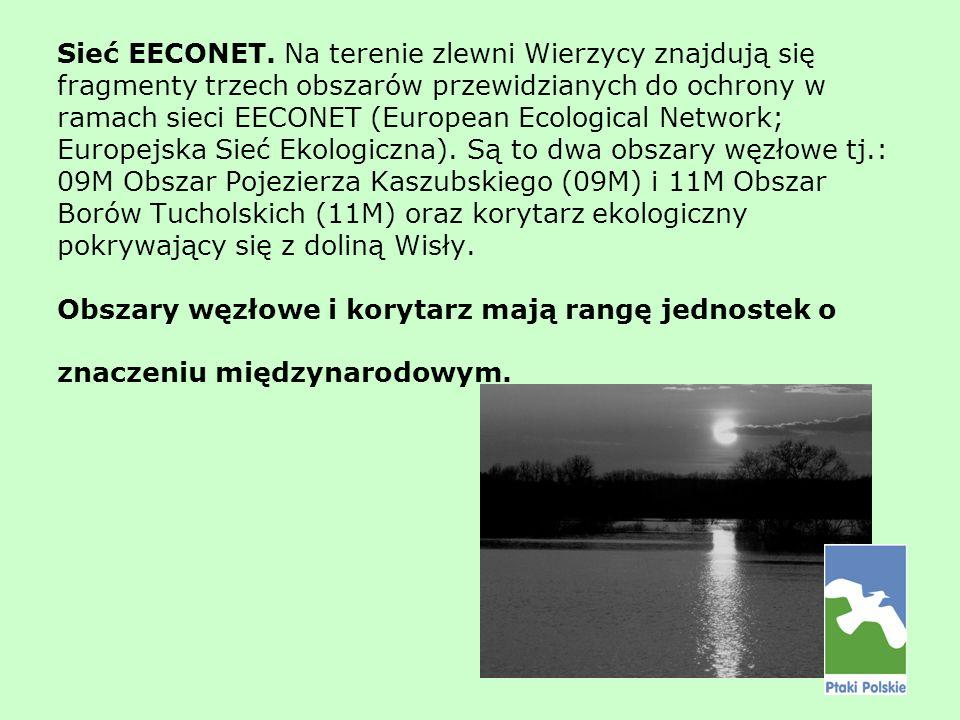 Sieć EECONET. Na terenie zlewni Wierzycy znajdują się fragmenty trzech obszarów przewidzianych do ochrony w ramach sieci EECONET (European Ecological