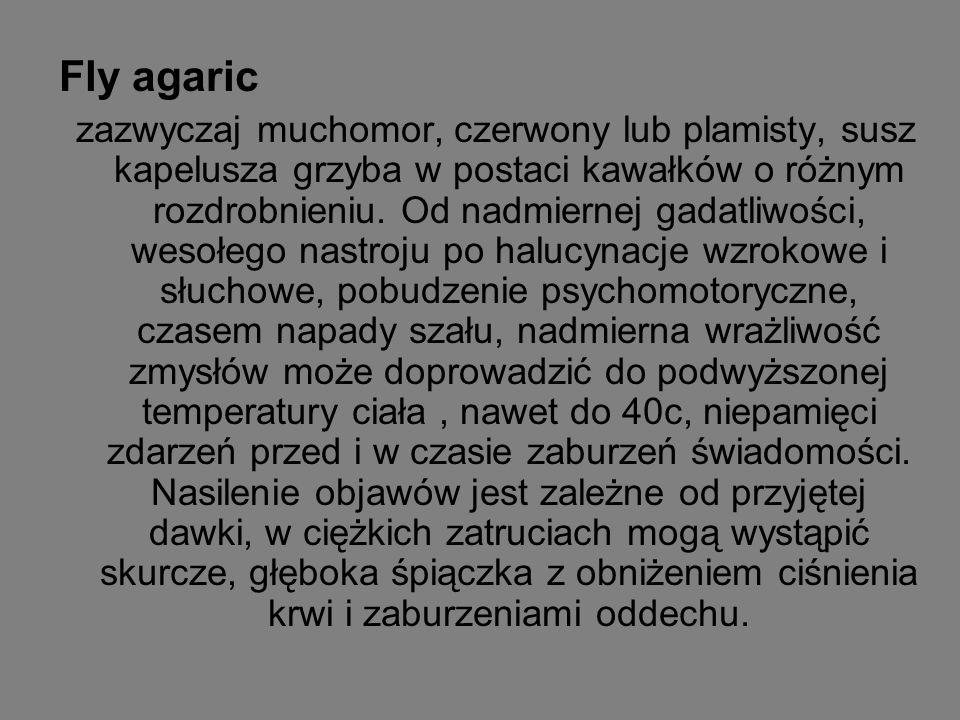 Fly agaric zazwyczaj muchomor, czerwony lub plamisty, susz kapelusza grzyba w postaci kawałków o różnym rozdrobnieniu. Od nadmiernej gadatliwości, wes