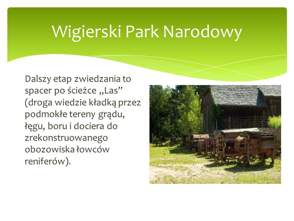 Wigierski Park Narodowy Dalszy etap zwiedzania to spacer po ścieżce Las (droga wiedzie kładką przez podmokłe tereny grądu, łęgu, boru i dociera do zre