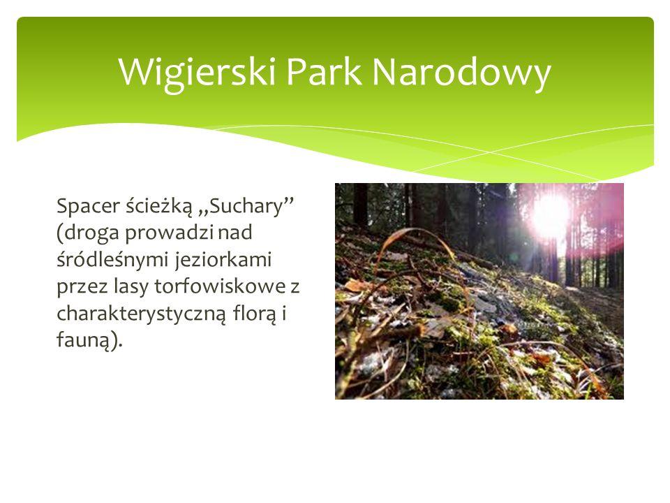 Wigierski Park Narodowy Spacer ścieżką Suchary (droga prowadzi nad śródleśnymi jeziorkami przez lasy torfowiskowe z charakterystyczną florą i fauną).