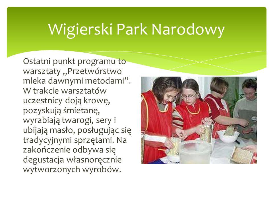 Wigierski Park Narodowy Ostatni punkt programu to warsztaty Przetwórstwo mleka dawnymi metodami. W trakcie warsztatów uczestnicy doją krowę, pozyskują