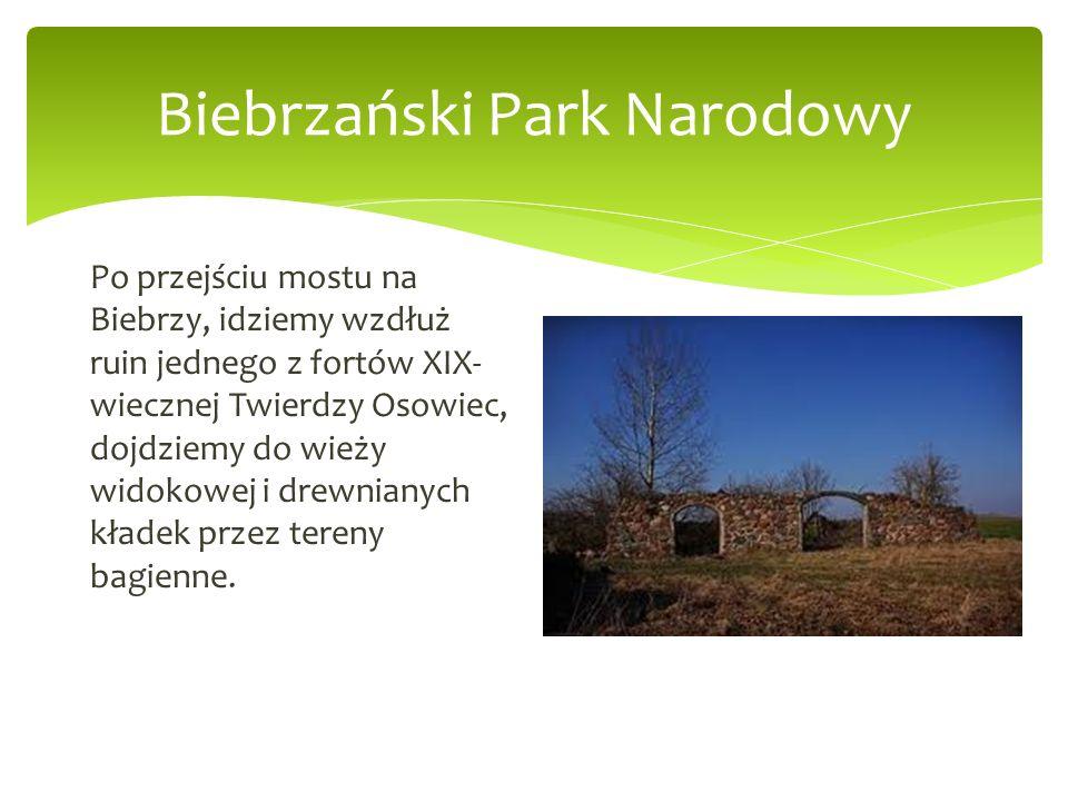 Biebrzański Park Narodowy Po przejściu mostu na Biebrzy, idziemy wzdłuż ruin jednego z fortów XIX- wiecznej Twierdzy Osowiec, dojdziemy do wieży widok