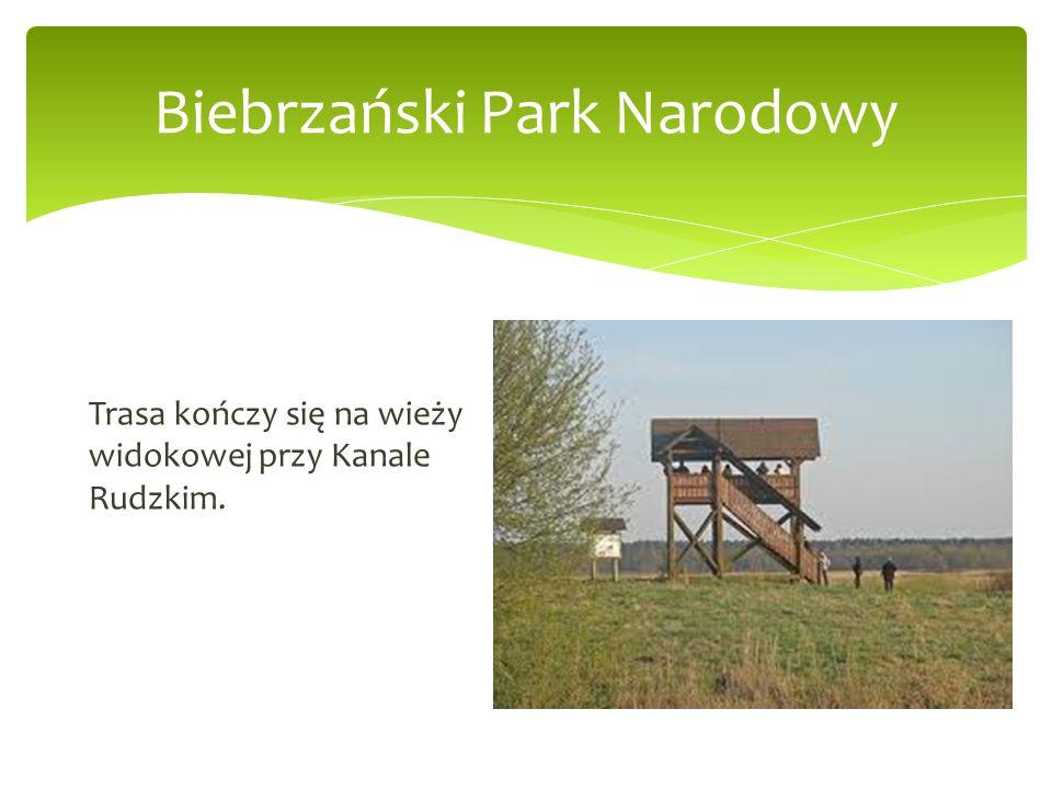 Biebrzański Park Narodowy Trasa kończy się na wieży widokowej przy Kanale Rudzkim.