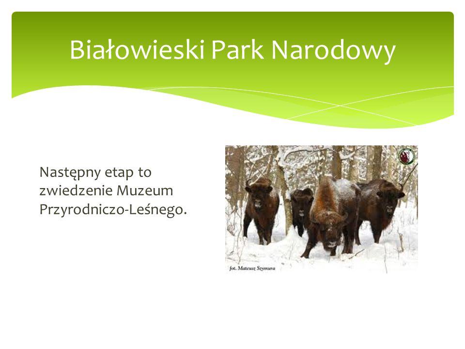 Białowieski Park Narodowy Następny etap to zwiedzenie Muzeum Przyrodniczo-Leśnego.