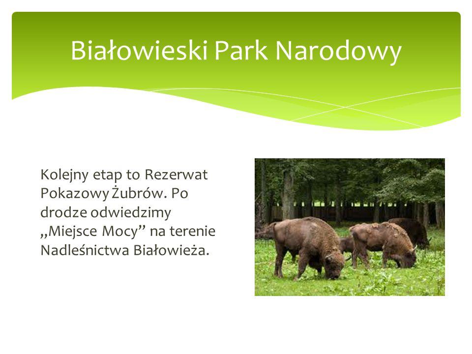 Białowieski Park Narodowy Kolejny etap to Rezerwat Pokazowy Żubrów. Po drodze odwiedzimy Miejsce Mocy na terenie Nadleśnictwa Białowieża.