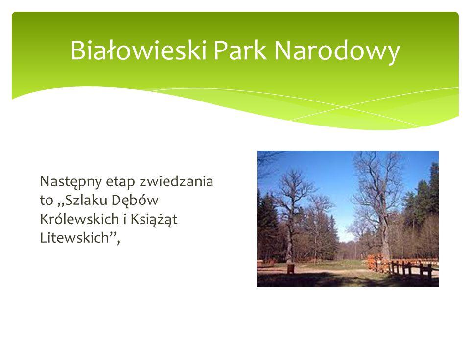 Białowieski Park Narodowy Następny etap zwiedzania to Szlaku Dębów Królewskich i Książąt Litewskich,