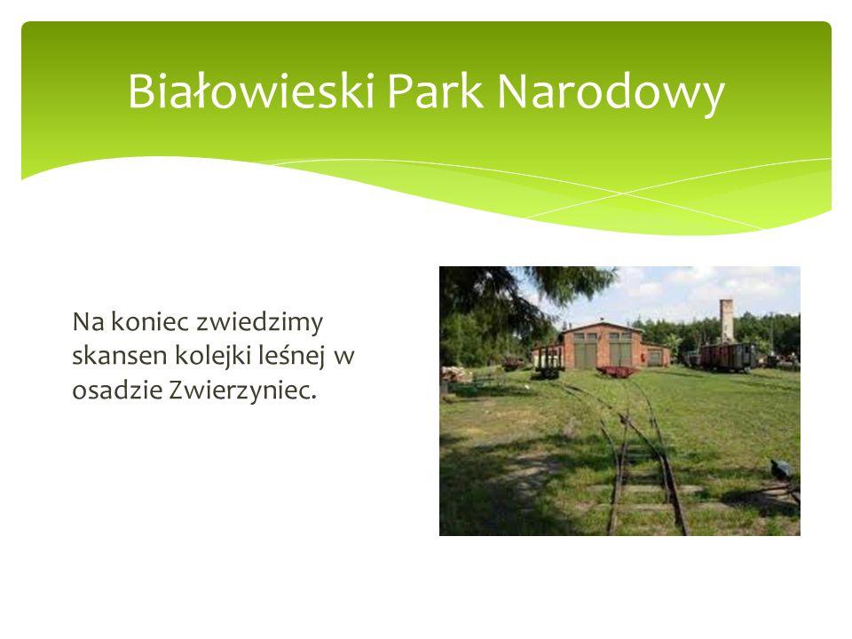 Białowieski Park Narodowy Na koniec zwiedzimy skansen kolejki leśnej w osadzie Zwierzyniec.