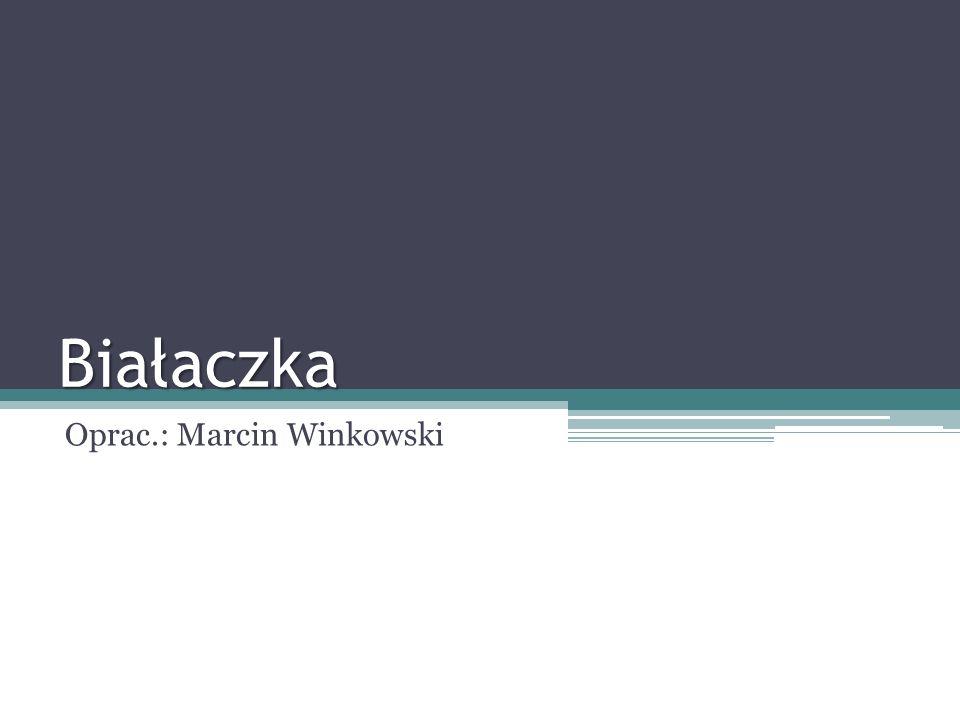 Białaczka Oprac.: Marcin Winkowski