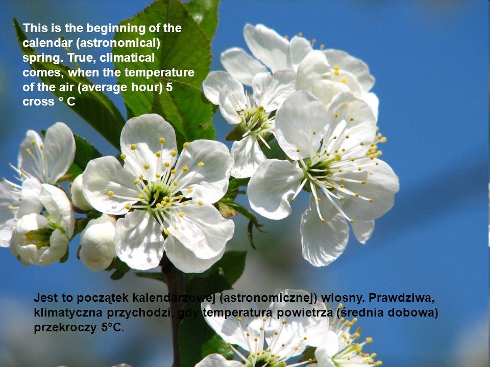 Jest to początek kalendarzowej (astronomicznej) wiosny.