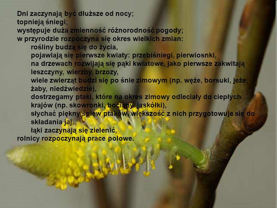Dni zaczynają być dłuższe od nocy; topnieją śniegi; występuje duża zmienność różnorodność pogody; w przyrodzie rozpoczyna się okres wielkich zmian: rośliny budzą się do życia, pojawiają się pierwsze kwiaty: przebiśniegi, pierwiosnki, na drzewach rozwijają się pąki kwiatowe, jako pierwsze zakwitają leszczyny, wierzby, brzozy, wiele zwierząt budzi się po śnie zimowym (np.