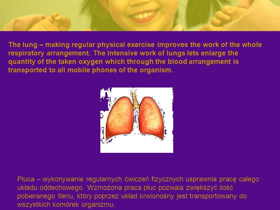 Płuca – wykonywanie regularnych ćwiczeń fizycznych usprawnia pracę całego układu oddechowego.