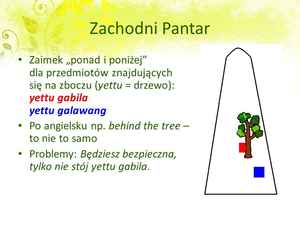 Zachodni Pantar Zaimek ponad i poniżej dla przedmiotów znajdujących się na zboczu (yettu = drzewo): yettu gabila yettu galawang Po angielsku np. behin