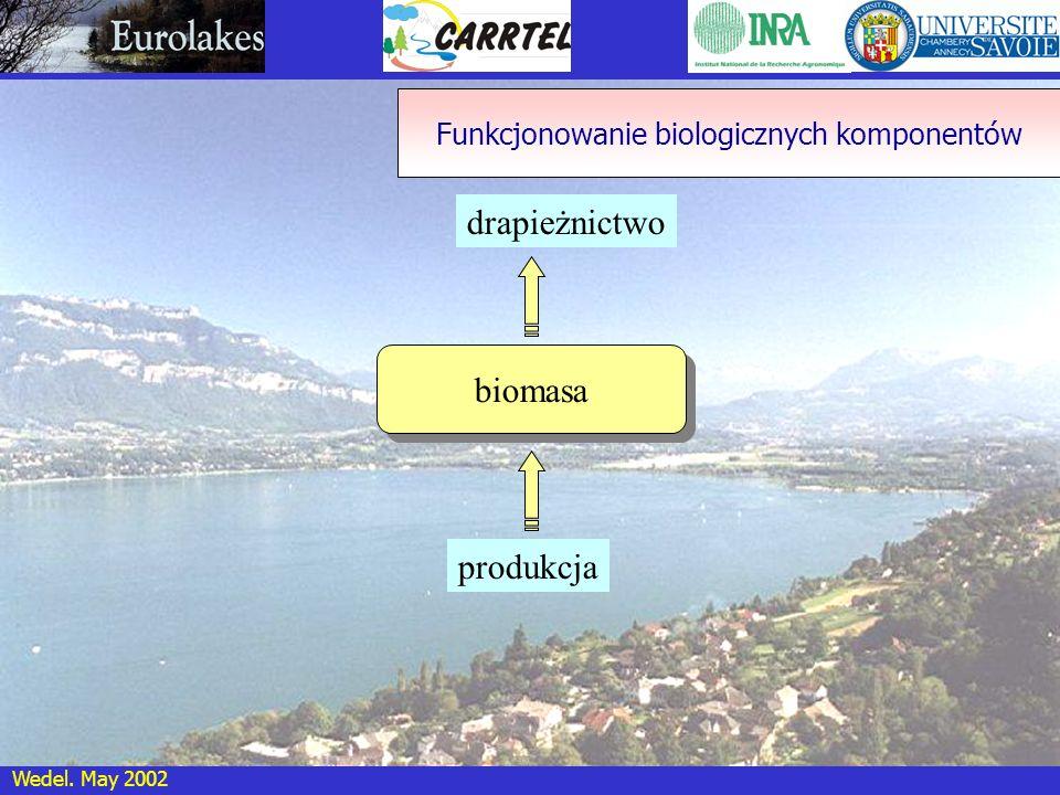 Wedel. May 2002 drapieżnictwo biomasa produkcja Funkcjonowanie biologicznych komponentów