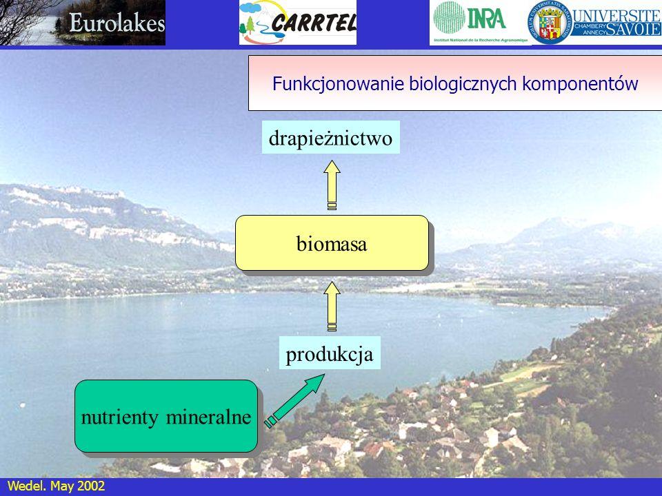 Wedel. May 2002 biomasa drapieżnictwo produkcja nutrienty mineralne Funkcjonowanie biologicznych komponentów