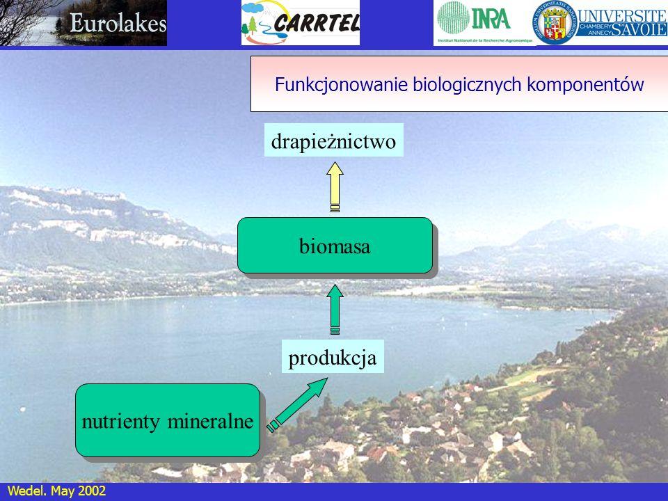 Wedel. May 2002 biomasa drapieżnictwo produkcja Funkcjonowanie biologicznych komponentów nutrienty mineralne