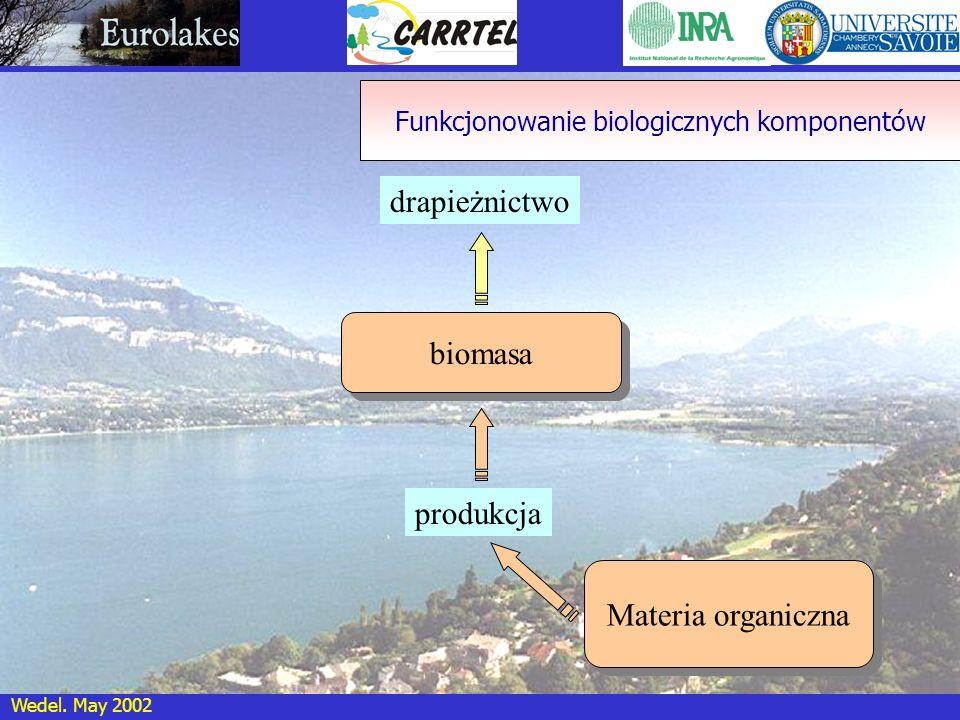 Wedel. May 2002 biomasa drapieżnictwo produkcja Funkcjonowanie biologicznych komponentów Materia organiczna