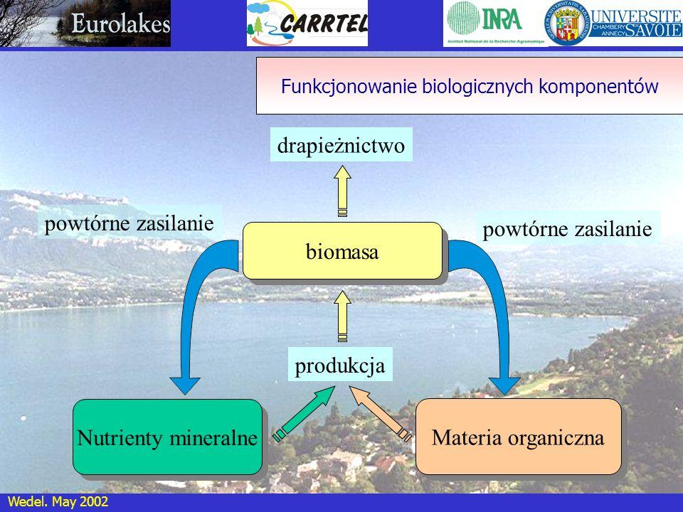 Wedel. May 2002 biomasa Materia organiczna powtórne zasilanie drapieżnictwo produkcja Funkcjonowanie biologicznych komponentów Nutrienty mineralne