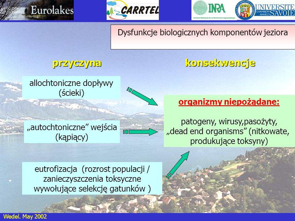 Wedel. May 2002 przyczyna allochtoniczne dopływy (ścieki) konsekwencje autochtoniczne wejścia (kąpiący) eutrofizacja (rozrost populacji / zanieczyszcz