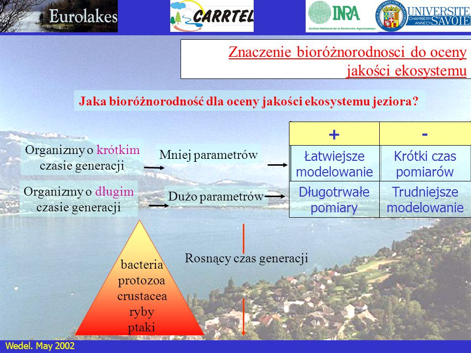 Wedel. May 2002 Znaczenie bioróżnorodnosci do oceny jakości ekosystemu Jaka bioróżnorodność dla oceny jakości ekosystemu jeziora? Organizmy o krótkim