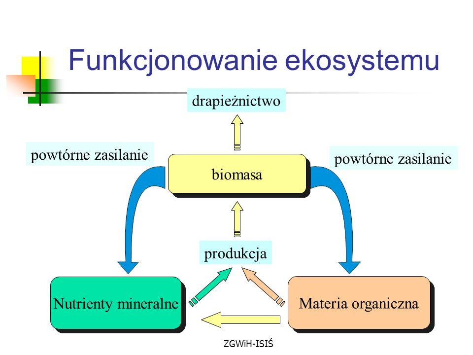 ZGWiH-ISIŚ Funkcjonowanie ekosystemu biomasa Materia organiczna powtórne zasilanie drapieżnictwo produkcja Nutrienty mineralne