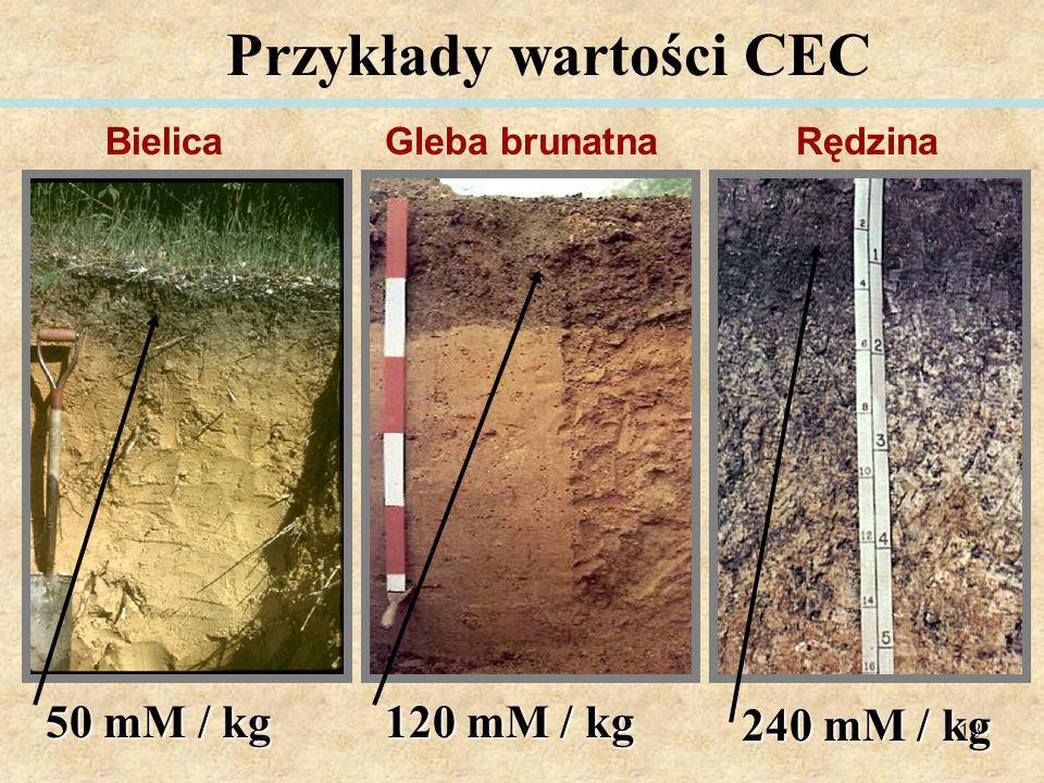 18 Przykłady wartości CEC 50 mM / kg 120 mM / kg 240 mM / kg RędzinaGleba brunatnaBielica