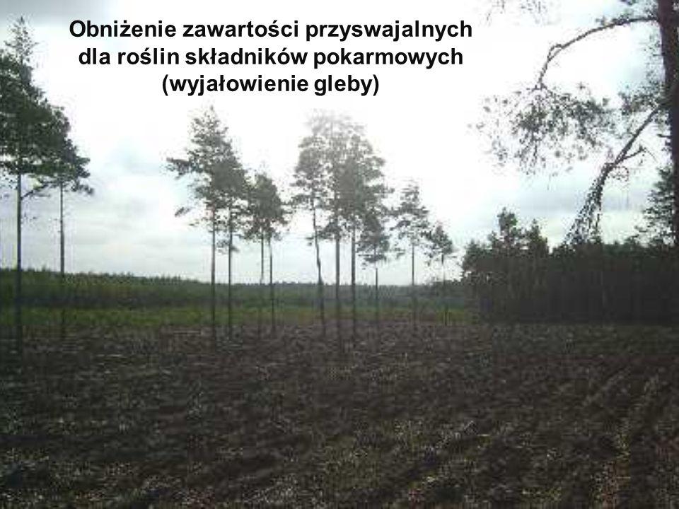 Obniżenie zawartości przyswajalnych dla roślin składników pokarmowych (wyjałowienie gleby)