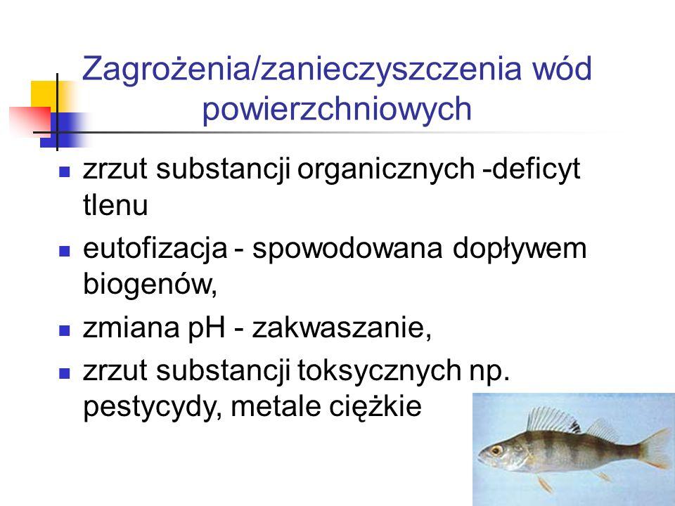 Skutki eutrofizacji wzrost zawartości fitoplanktonu oraz zmiany jego gatunków wzrost zawartości zawiesin i spadek przezroczystości wody wzrost warstwy osadów dennych spadek zawartości tlenu zmiana w liczebności i gatunkach ryb