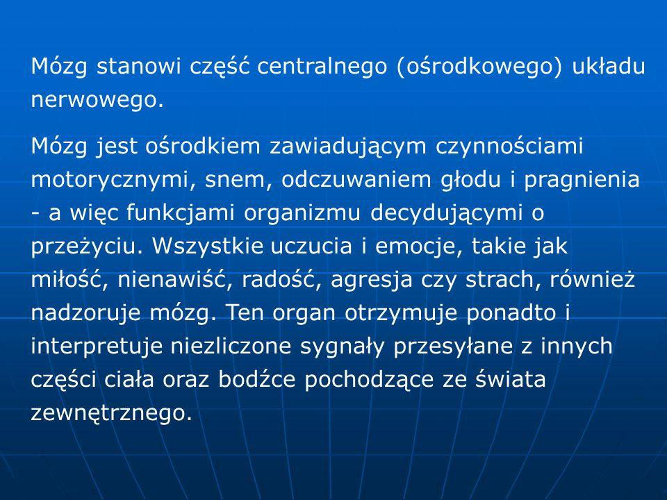 Specjalizacje półkul mózgowych Lewa półkula Lewa półkula zawiaduje: MOWA - Półkula ta odpowiedzialna jest za funkcje językowe.