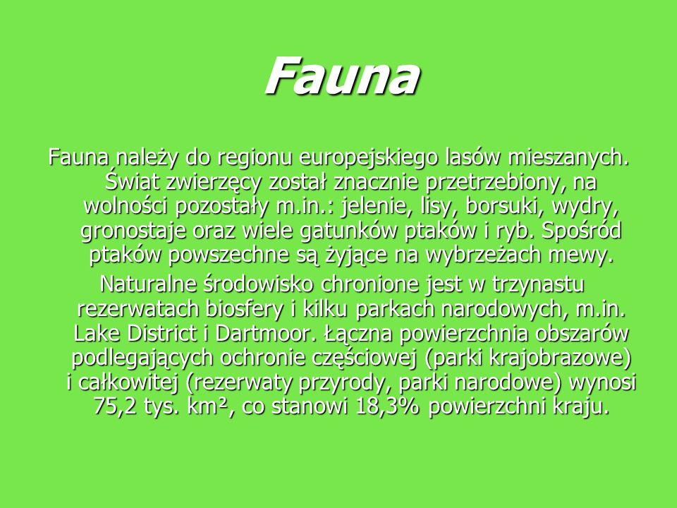 Fauna Fauna należy do regionu europejskiego lasów mieszanych. Świat zwierzęcy został znacznie przetrzebiony, na wolności pozostały m.in.: jelenie, lis