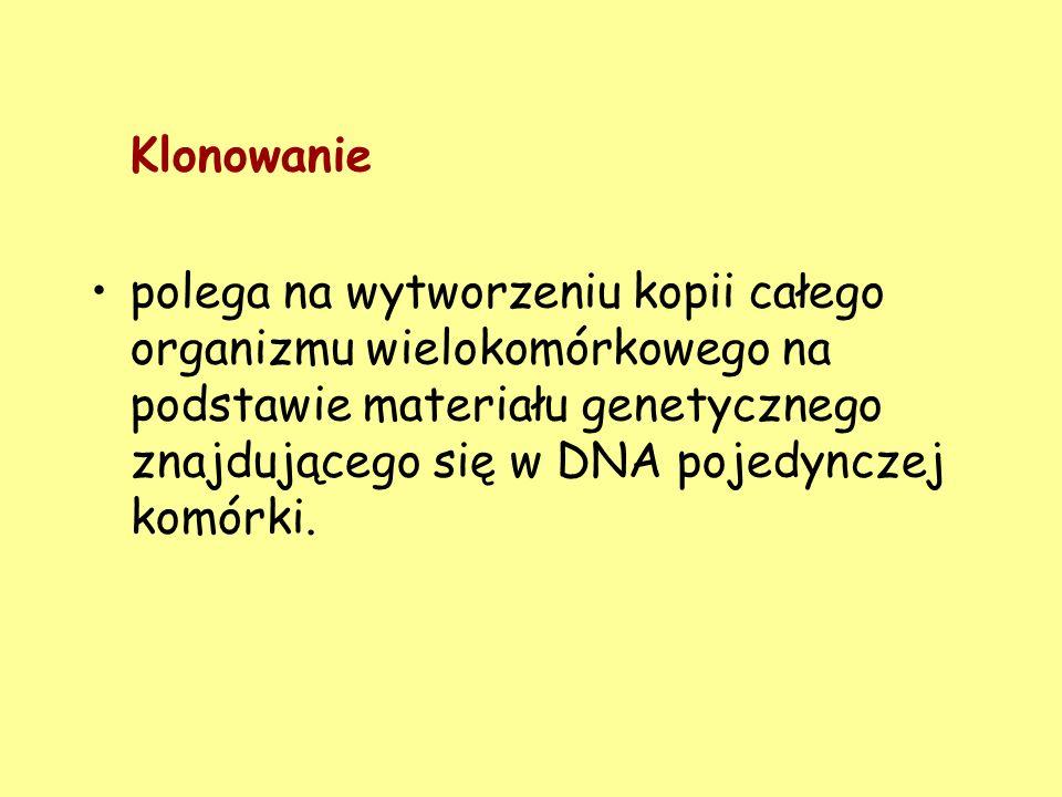 Klonowanie polega na wytworzeniu kopii całego organizmu wielokomórkowego na podstawie materiału genetycznego znajdującego się w DNA pojedynczej komórk