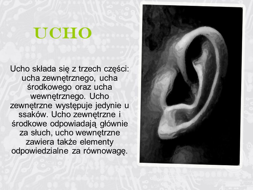 Ucho Ucho składa się z trzech części: ucha zewnętrznego, ucha środkowego oraz ucha wewnętrznego. Ucho zewnętrzne występuje jedynie u ssaków. Ucho zewn