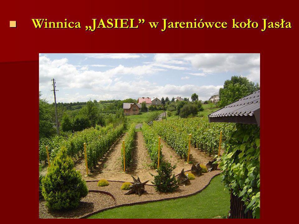 Winnica JASIEL w Jareniówce koło Jasła Winnica JASIEL w Jareniówce koło Jasła