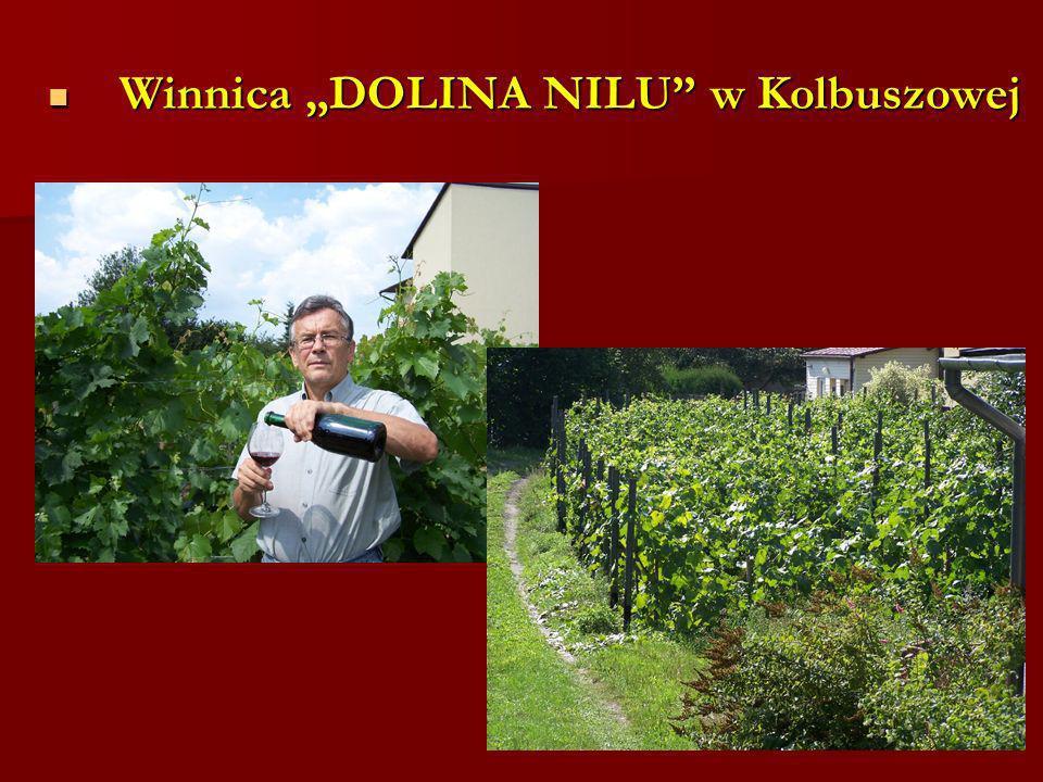 Winnica DOLINA NILU w Kolbuszowej Winnica DOLINA NILU w Kolbuszowej