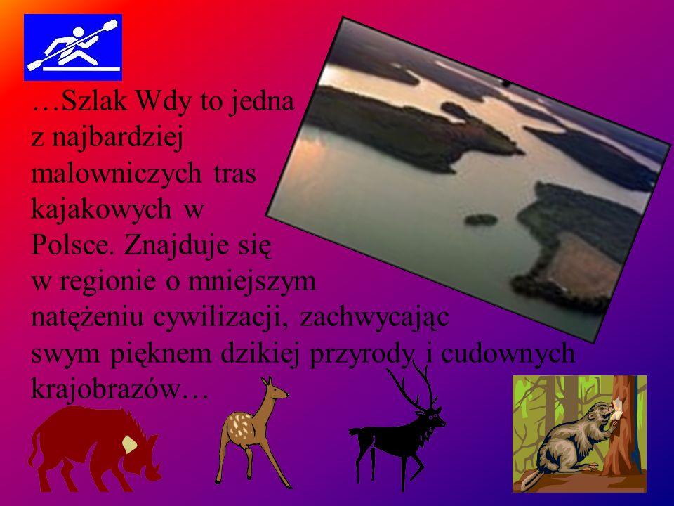 …Szlak Wdy to jedna z najbardziej malowniczych tras kajakowych w Polsce. Znajduje się w regionie o mniejszym natężeniu cywilizacji, zachwycając swym p