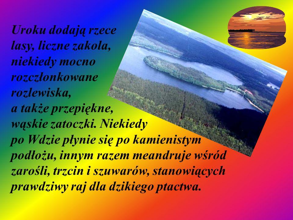 Uroku dodają rzece lasy, liczne zakola, niekiedy mocno rozczłonkowane rozlewiska, a także przepiękne, wąskie zatoczki. Niekiedy po Wdzie płynie się po
