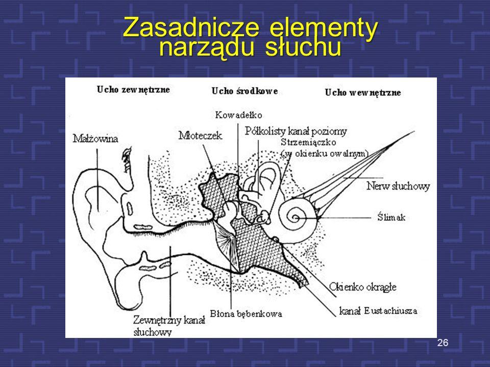 Anatomia narządu słuchu 25